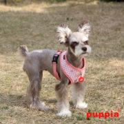 peitoral-puppia-aggie-rosa3
