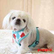 peitoral-puppia-argyle-aqua3