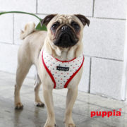 peitoral-puppia-pax-vermelho4