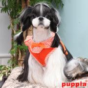 peitoral-puppia-vivien-laranja3