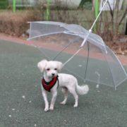 chapeu de chuva puppia2