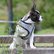 peitoral-puppia-bobby-riscas3