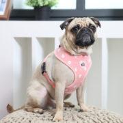 peitoral-puppia-ernest-rosa4