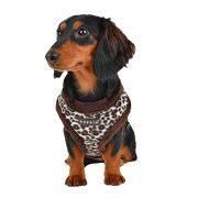 peitoral puppia leonard castanho cão