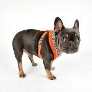 peitoral puppia auden laranja3-570x570