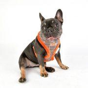 peitoral puppia auden laranja4-570x570