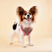 peitoral puppia auden rosa3-570x570