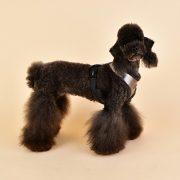 peitoral puppia evon prateado4-570x570