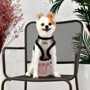 peitoral puppia evon prateado5-570x570