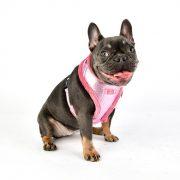 peitoral puppia evon rosa4-570x570