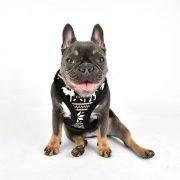 peitoral puppia prancer preto3-570x570