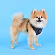 peitoral puppia terry cinzento4-570x570