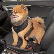 cinto de segurança puppia preto2