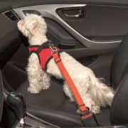 cinto de segurança puppia vermelho2