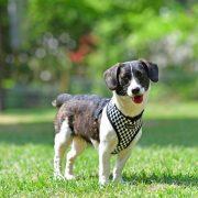 peitoral puppia racer preto3