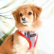 Peitoral Puppia Caiden vermelho cão