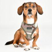 Peitoral Puppia Lance Verde cão