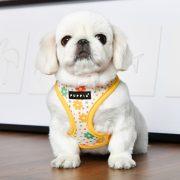 Peitoral Puppia Vinca Amarelo cão